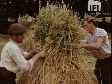 DesEgan Harvest