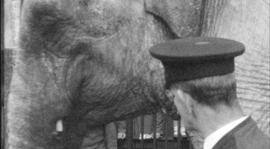 Dublin Zoo_04-min