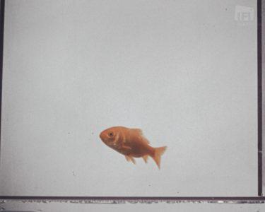 af8550_ifard2016145.13_dublin_corporation_goldfish_mezzanine.01